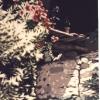 Il passare del tempo - 1988, cm. 40x50
