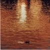 L'ochetta - 1991, cm. 100x100
