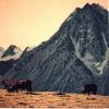 La montagna - 1994, cm. 100x100
