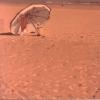 L'ombrellone - 1975, cm. 50x50