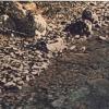 Chiare, fresche... - 1992, cm. 70x50