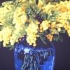 Le mimose - 2004, cm. 100x100