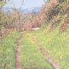 Arrivando da Gorisa - 2006, cm. 55x45