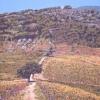 La quercia del quadrivio - 2006, cm. 60x80