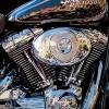 Harley e Portofino - 2008, cm. 80x80