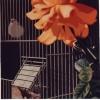 Le nuove libertà - 1990 - cm 70x70