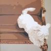 Il salto - 2004 - cm 70x70