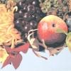 La grande mela (l'autunno) - 2001 - cm 70x50