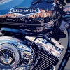 Harley e Portofino II - 2008 - cm 80x80