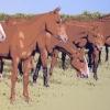 Il branco - 2010 - cm 120x60