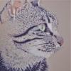 Il gatto che compare - 2021 - cm 70x70