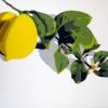 Il fiore e il frutto - 2020 - cm 70x50